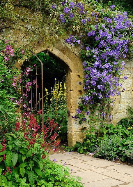 Sudeley Archway Clematis