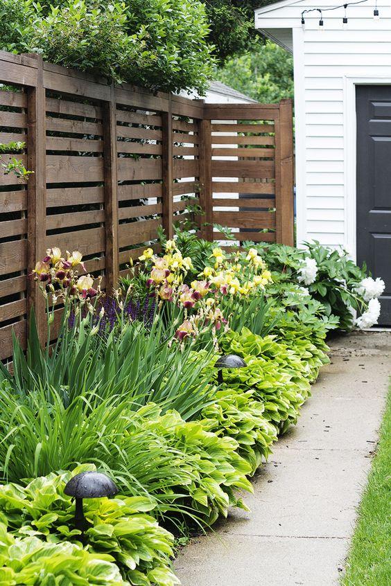Irises and Hostas